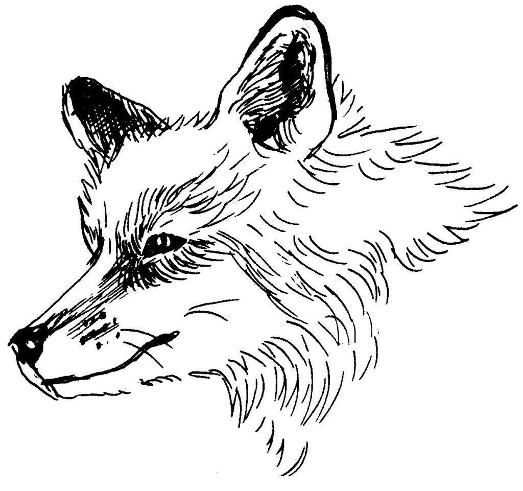 Dessin coloriage animal renard