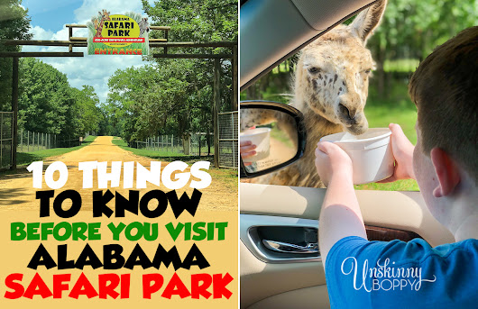 10 Tips for Visiting Alabama Safari Park with the Kids