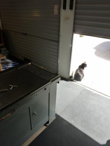 Studio guardcat