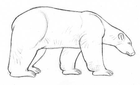 Dibujo Lapiz Animales En Peligro De Extincion