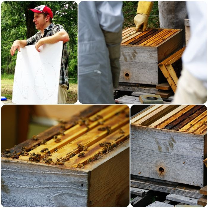 beekeeping classes ::: bake at 350 blog