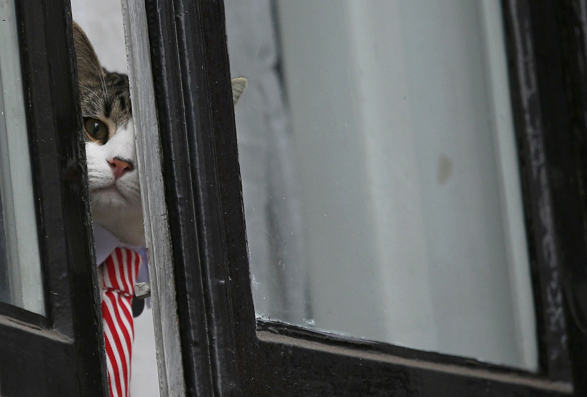 Julian Assange's cat sits at the window of Ecuador's embassy as prosecutor Ingrid Isgren from Sweden interviews Assange in London