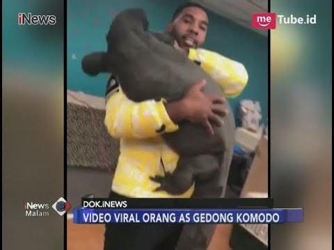 Heboh, Pria Ini Gedong Komodo, Naga Terbuas