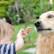Your Dog Bit Me! - Canine Behavior Counseling