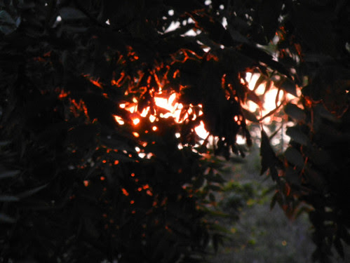 Sunset _ 4223
