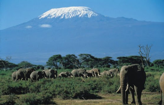 5 Days/4 Nights – Maasai Mara / Lake Nakuru /..., Kenya | Synotrip
