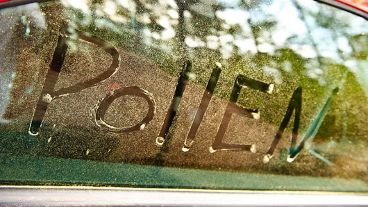 For Allergy Season 2015, So-Called Pollen Vortex Debated