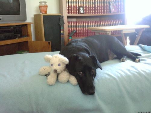Quinn & his bear