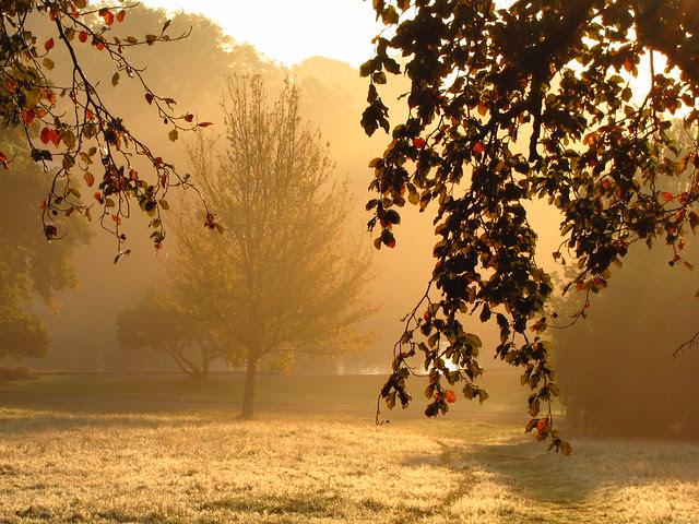 The Tumulus Field at Sunrise