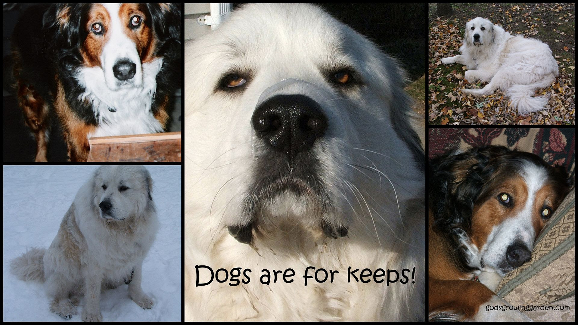 Dogs are for keeps by Angie Ouellette-Tower for godsgrowinggardencom/ photo 2009AnimalKids_zps70fade41.jpg