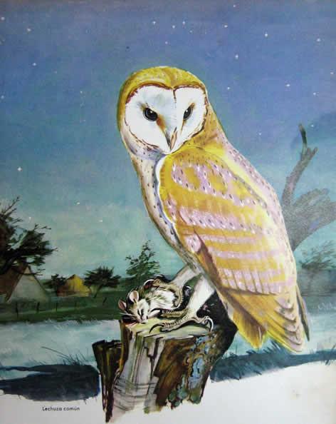 Arte Rupestre Mitología Simbología Avifauna Rapaces Nocturnas Region
