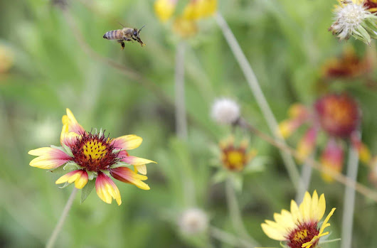 'Hyperalarming' study shows massive insect loss - Laredo Morning Times