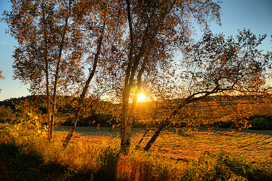 October Sunset Golden Glow by Lilia D