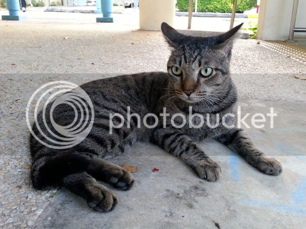 photo CatJRT17May09.jpg