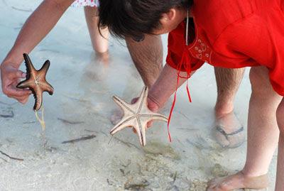 okasan starfish