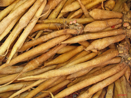 Ginseng Health Benefits