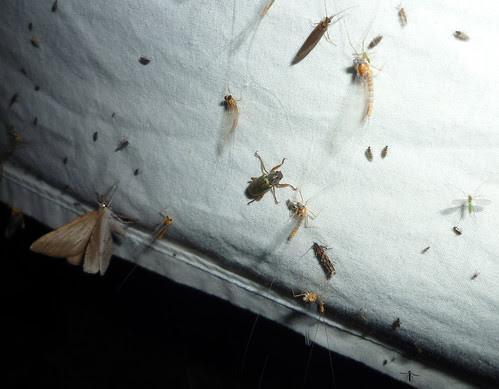 bug sheet fun
