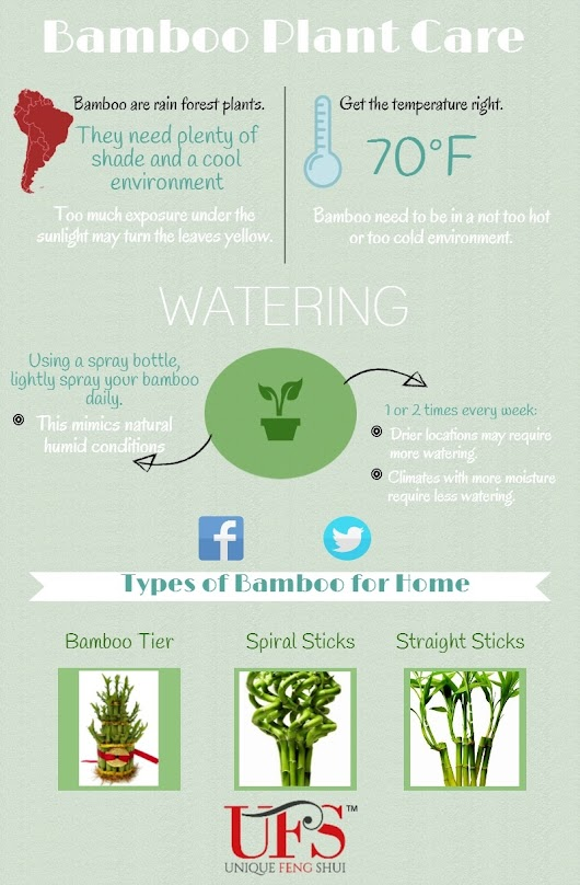 How to Care for a Lucky Bamboo Plant (Infographic)