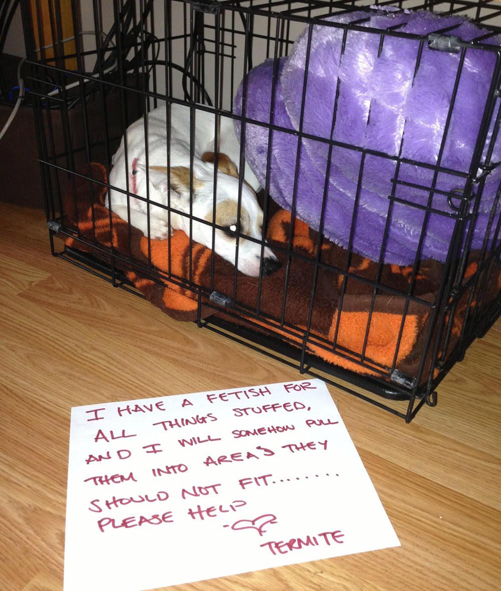 dog shaming 07 32 Hillarious Public Shaming of Dogs