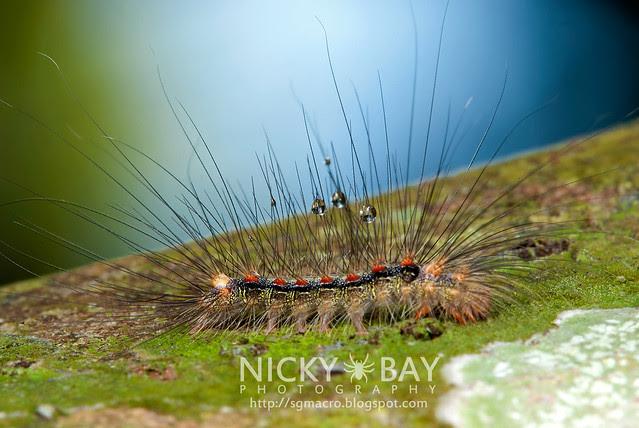 Caterpillar - DSC_5559