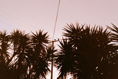 sunrise yuccas 2