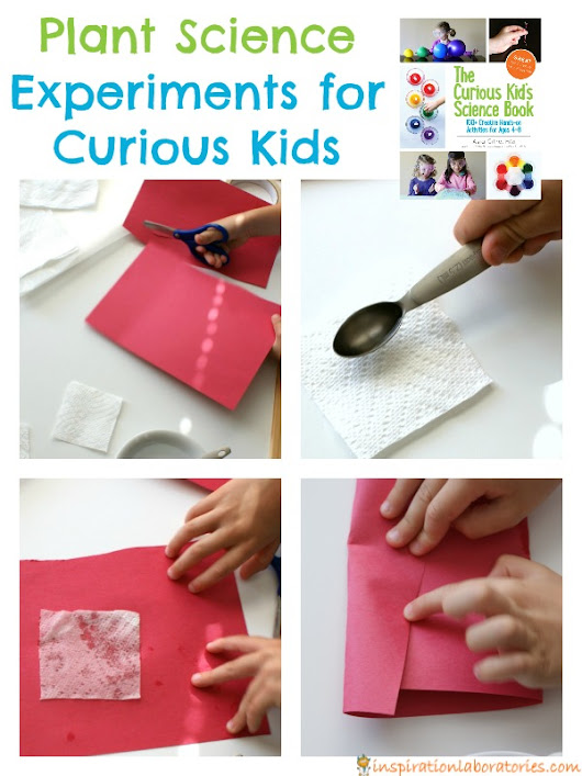 Plant Science Experiments for Curious Kids | Inspiration Laboratories