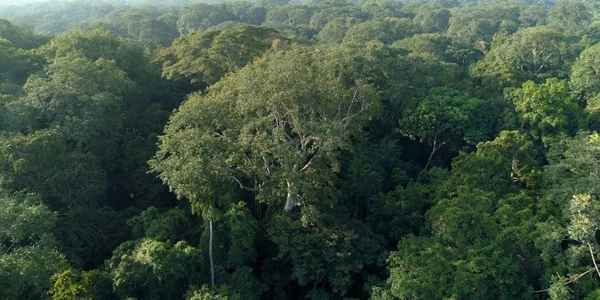 Poumon vert et tapis rouge (2021) English Full Movie Watch Online