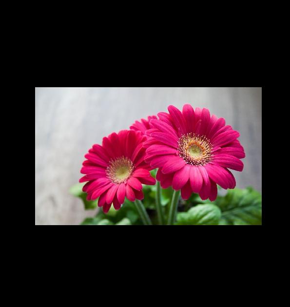 Contoh Teks Laporan Hasil Observasi Tentang Bunga Melati Seputar Laporan