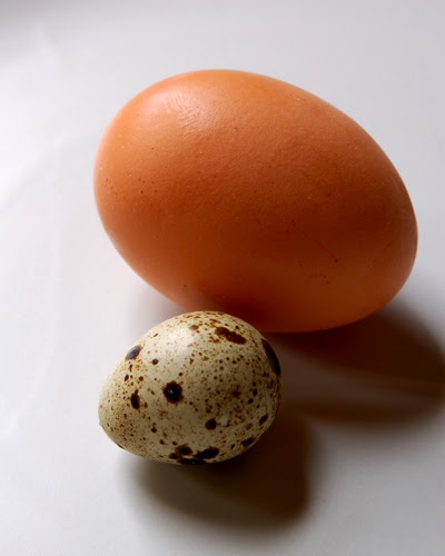quail v chicken egg ©