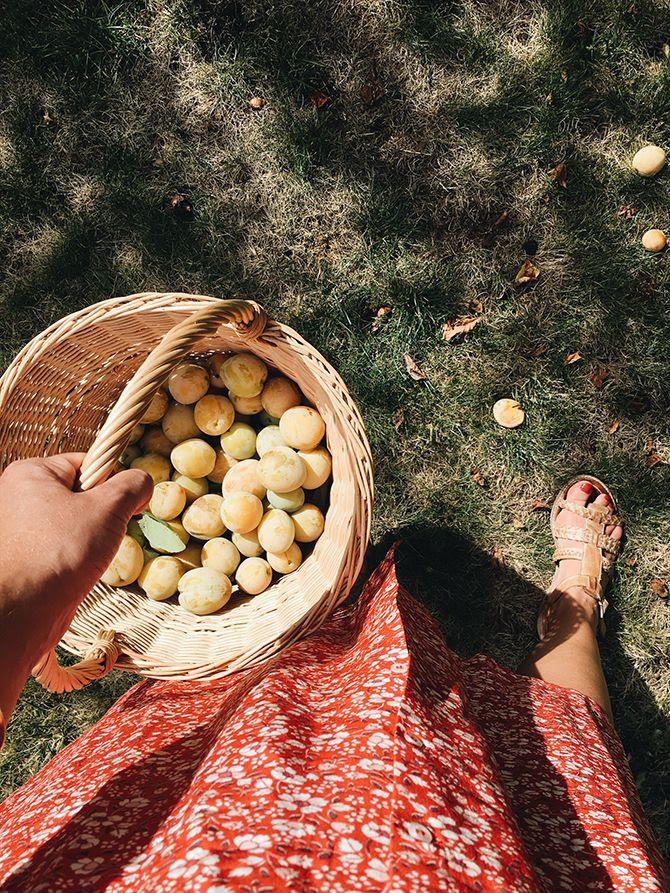 photo 4-Robe Laura Rouje Jeanne Damas french basket_zpsdyyj3qnt.jpg