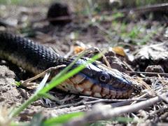 Yipes! A Snake.