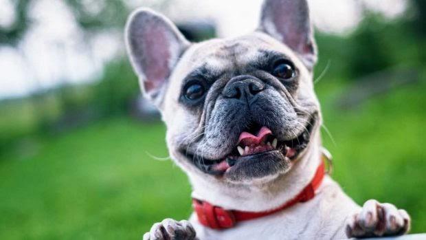 Origen de las náuseas en los perros