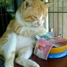 kucing suka duit gambar lucu