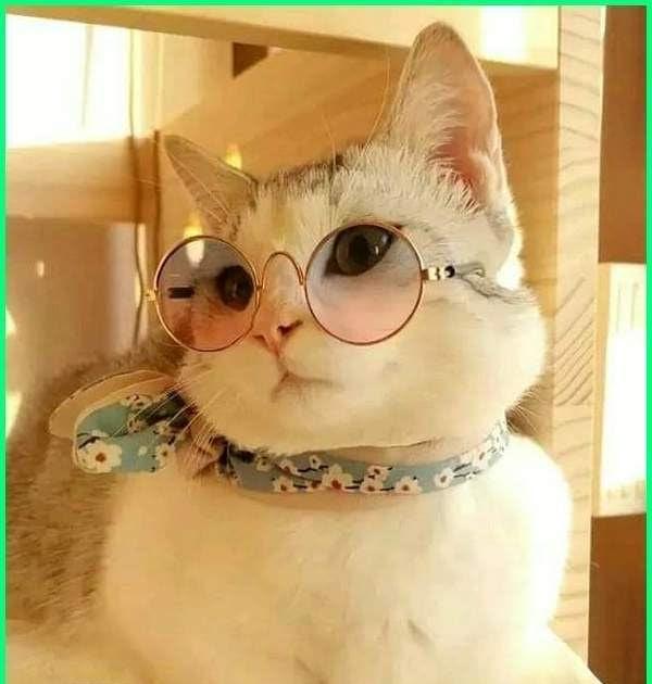Kucing Lucu Nama Nama Kucing