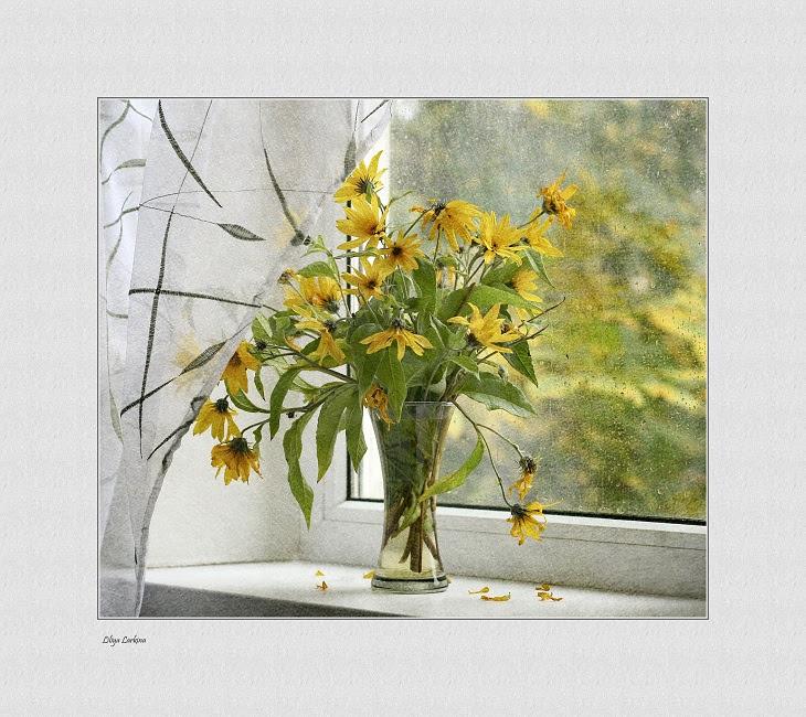 Фото жизнь (light) - Lilliya - корневой каталог - когда идет дождь