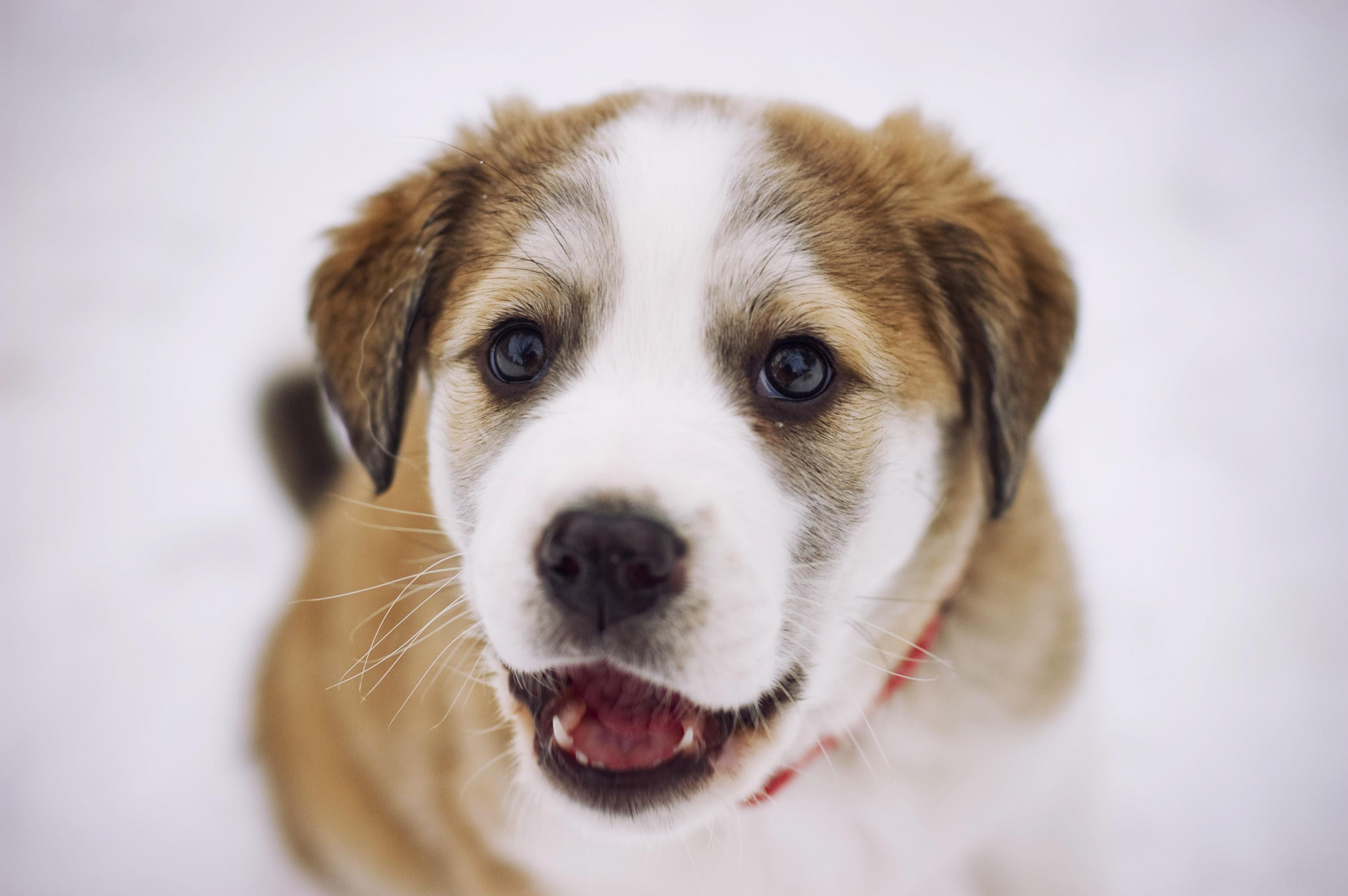 フリー画像動物写真哺乳類イヌ科犬イヌ子犬フリー素材画像素材