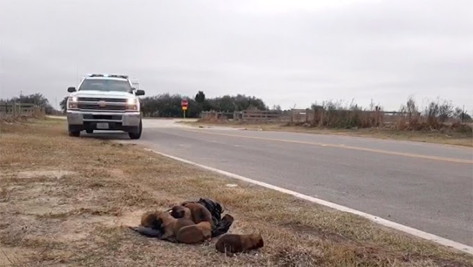 Ocho hermosos cahorros recién nacidos fueron arrojados desde un automóvil por un «monstruo»
