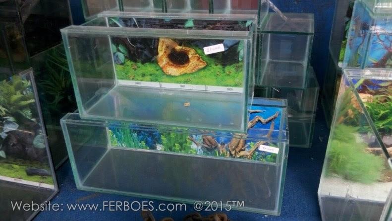Harga Aquarium Murah Meriah Guys Ferboes Com