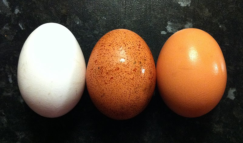 Colour variety of egg