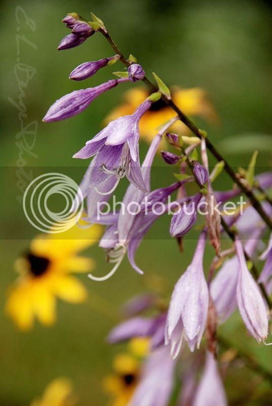 photo Purple.jpg