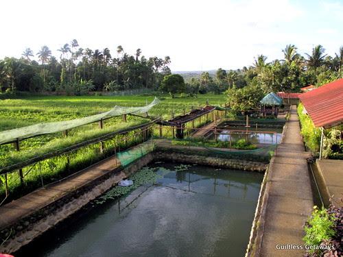 organic-fish-pond.jpg