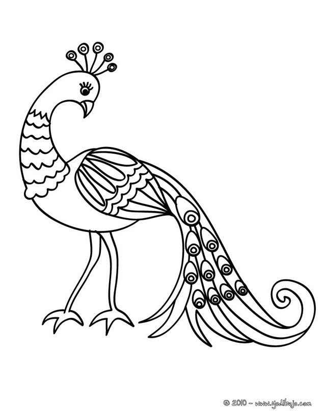 Dibujos De Aves Y Pajaros 69 Dibujos De Animales Para Colorear Y