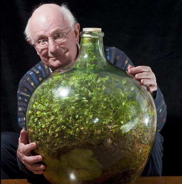 "perierga.gr - ""Αθάνατο"" φυτό ζει στο μπουκάλι χωρίς νερό και αέρα για 40 χρόνια!"