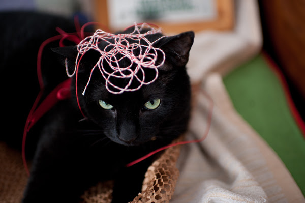 cats & string