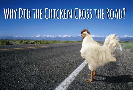 """Why did the Chicken Cross the Road?"" an OpEx Answer"