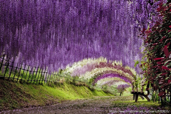 "The Wisteria Flower Tunnel at Kawachi Fuji Garden ""TwistedSifter"