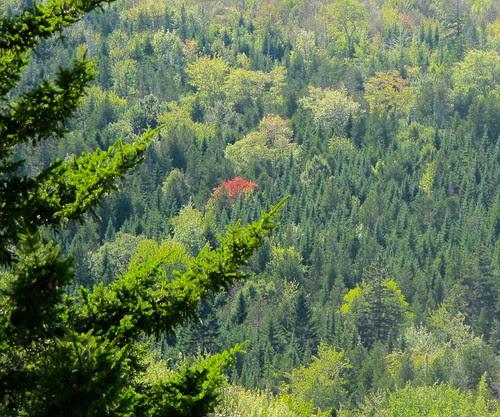 Trend Setter - Crane and Bell Mountains Walk September 15, 2013