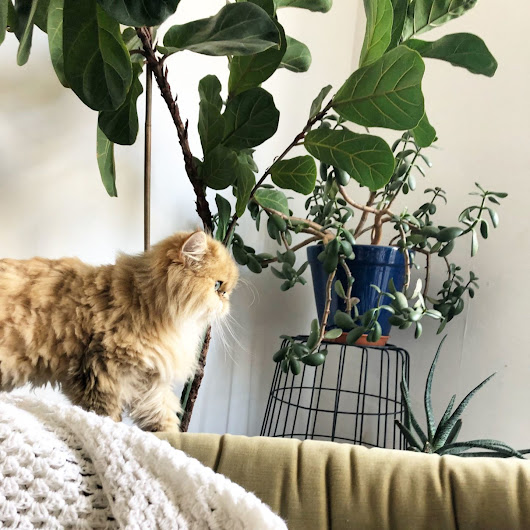 How to Protect Houseplants from Cats | Meow Lifestyle