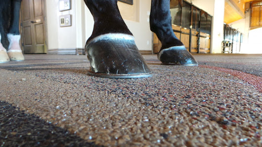 Why We Don't Recommend WERM, Polylast or Rhino Lining for Your Horse Trailer Floor