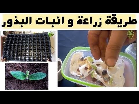 مبادئ أساسية و شرح مبسط لتعلم الزراعة المنزلية و العناية بنباتات الزينة